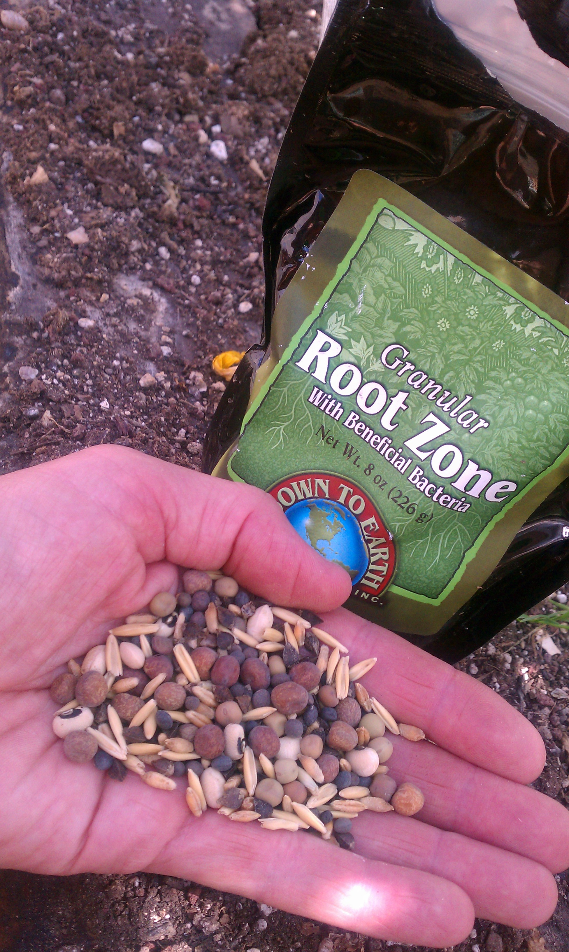 green manure out standing in the garden
