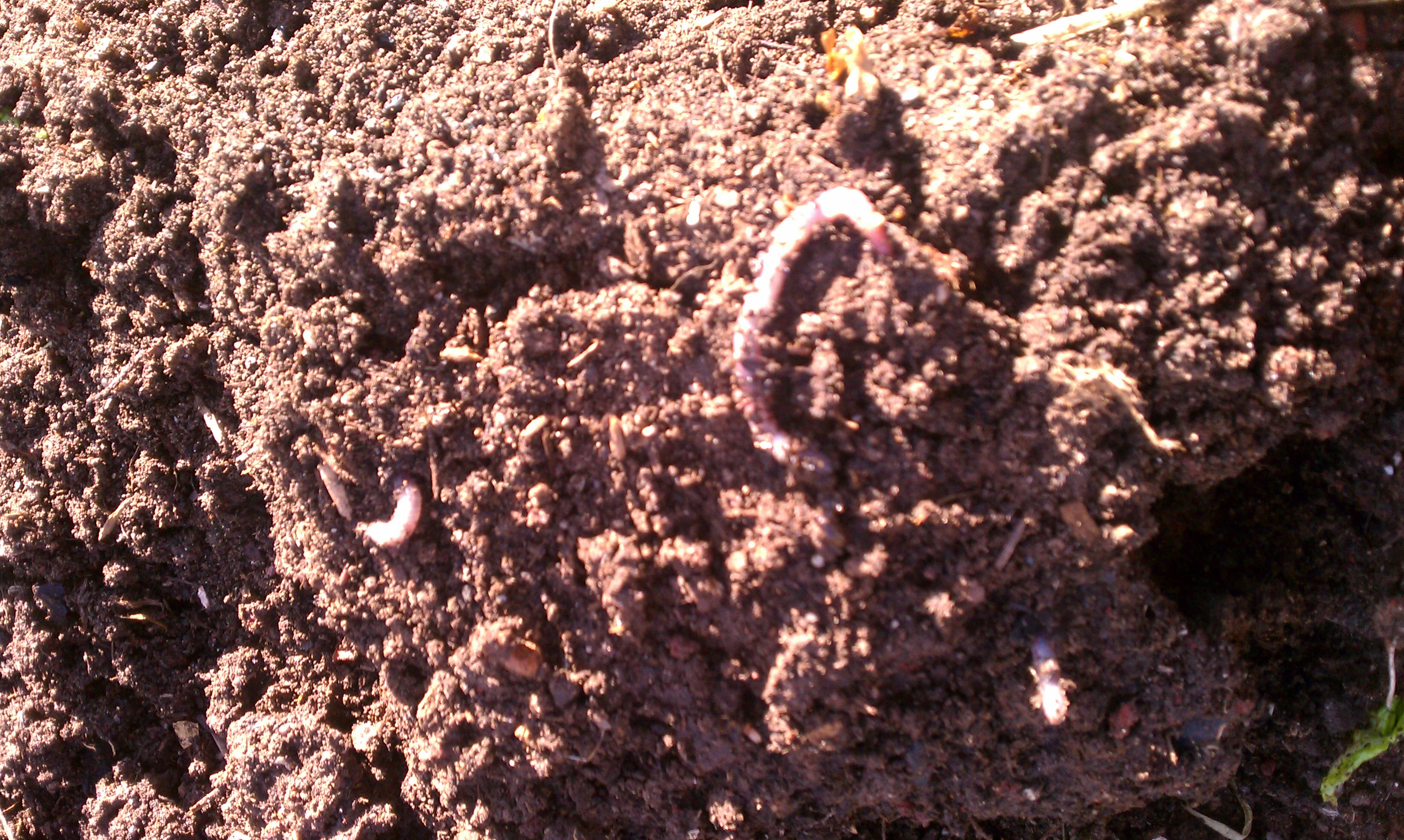 Good soil bacteria out standing in the garden for Things in soil