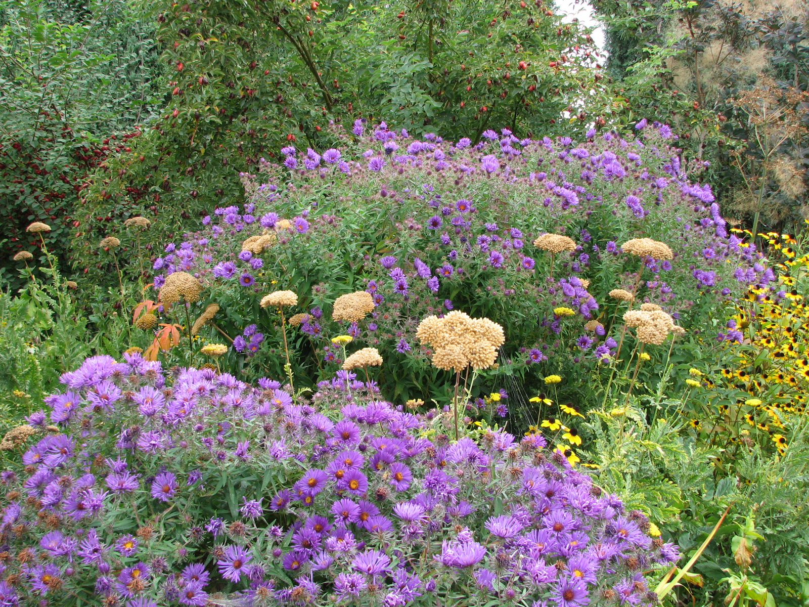 love those perennials out standing in the garden