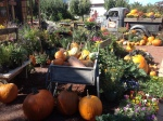 Fall 2013 at Ali's Organic Garden Supply