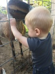 Our Grandson and the Goats